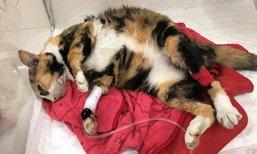 มะลิ ทูนหัวของบ่าว แมวเพจดังสิ้นใจแล้ว อายุเท่า 80 ปีมนุษย์