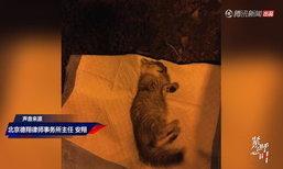 ชายใจเหี้ยม เขวี้ยงแมวลงพื้นจนตาย ลั่น แมวฉัน ฉันจะทำยังไงก็ได้!