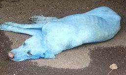 อินเดียตะลึง! พบหมาสีฟ้า หลังลงว่ายน้ำในแม่น้ำปนเปื้อนมลพิษ