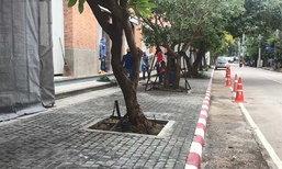 วิจารณ์ยับ ! โรงแรมดังเชียงใหม่ ปลูกต้นไม้ใหญ่หลายต้น กลางฟุตบาท