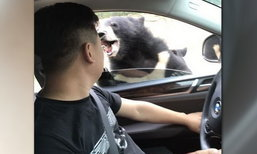 หวาดเสียวอีก! นทท.จีนเปิดกระจกรถให้อาหารหมี ถูกกัดเลือดซิบ