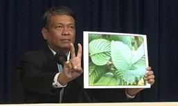 อดีตส.ส.ประชาธิปัตย์ ร้องนายกฯ ปลดล็อคกระท่อมเป็นพืชสมุนไพร