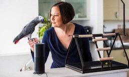 นกแก้วแสนรู้ เลียนเสียงเจ้าของสั่งของออนไลน์จากอเมซอน