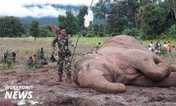 ลุ้นสุดใจ! ชาวบ้านร่วมช่วยช้างขึ้นจากคลอง จนท.รุดให้น้ำเกลือช้าง