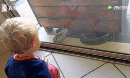 แม่แทบช็อก งูเหลือมโผล่ข้างบ้าน ลูกชาย 2 ขวบนั่งจ้องตาเขม็ง