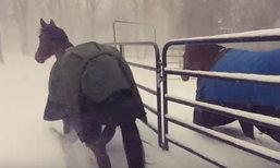 อเมริกาเหนือหนาวหนัก ขนาด 2 เจ้าม้ายังวิ่งกลับเข้าคอกแทบไม่ทัน