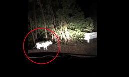 คนญี่ปุ่นแห่แชร์ แมวนำทางหลังรถหลงป่าลึก พาออกมาได้สำเร็จ
