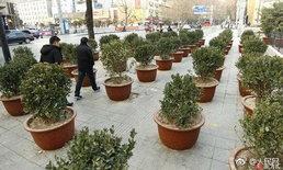 จีนจัดระเบียบทางเท้า วางกระถางต้นไม้กันแผงลอยกลับมายึด