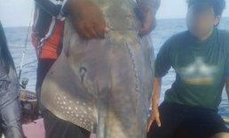 โซเชียลวิจารณ์เละ นักตกปลาจับสัตว์หายากมาถ่ายรูปคู่