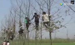 วิ่งป่าราบ! ชาวอินเดียปีนขึ้นต้นไม้ หนีเสือ ขย้ำกินคน 22 รายแล้ว