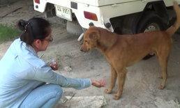 โซเชียลสาปแช่ง วางยาหมาแต่ช่วยทัน ครั้งที่ 5 ที่หมาตัวนี้โดน
