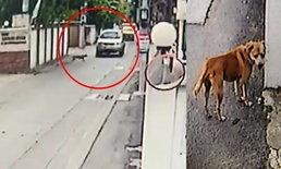 มิค บรมวุฒิ โชว์ภาพวงจรปิดนาทีรถทับหมาที่บ้าน คนขับไร้จิตสำนึกไม่ลงมาเหลียวแล