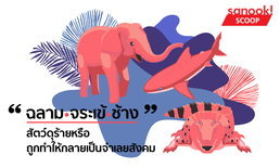 """""""ฉลาม – จระเข้ – ช้าง"""" สัตว์ดุร้ายหรือถูกทำให้กลายเป็นจำเลยสังคม"""