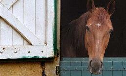 """จับตา """"พิษสุนัขบ้าในม้า"""" หลังพบม้าตายในฟาร์มที่ ประจวบฯ"""