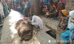 หญิงอินเดียถูกงูเห่ากัด เชื่อหมองูแนะเอาขี้วัวกลบร่าง สุดท้ายขาดอากาศหายใจตาย