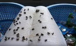 ทัพแมลงวันบุก ชาวบ้านทั้งเดือดร้อนทั้งโดนข่มขู่ คาดเหตุจากฟาร์มไก่