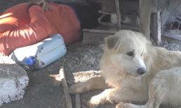 ภาพเศร้า หมาแสนรู้วิ่งไปตามคนมาช่วยเจ้าของ ก่อนนอนเฝ้าศพไม่ห่าง