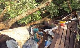 พายุลูกเห็บถล่มหนัก สลดชายวัย 51 ถูกต้นไม้ล้มทับเสียชีวิต