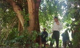 ในวัดก็ไม่เว้น คนร้ายบุกถึงวัดป่าใช้เลื่อยตัดต้นพะยูง โชคดีมีคนพบเผ่นหนีเข้าป่า