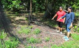 โมโหแจ้งจับลิง ฝูงลิงทัวร์จีนบุกเข้าถล่มสวนผลไม้ยับ เจ้าของทัวร์ไม่รับผิดชอบ