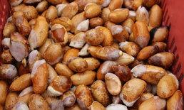 แพงกว่าลูกทุเรียน ชาวบ้านแห่ขายเมล็ดทุเรียน กิโลกรัมละ 80 บาท