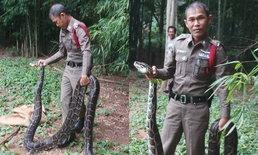 ชาวบ้านปลื้มแห่แชร์สนั่น ผู้กองบึ่งจับงูเหลือมใหญ่ด้วยมือเปล่า