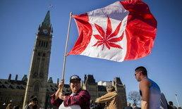 """ใครใคร่พี้ พี้! """"แคนาดา"""" ผ่านกฎหมายใช้ """"กัญชา"""" เพื่อผ่อนคลายส่วนตัว"""