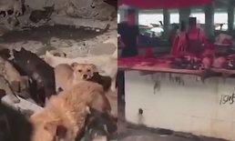 """กลุ่มสิทธิสัตว์แฉ """"โรงเชือดหมา"""" สุดโหด ประเดิมเทศกาลกินเนื้อสุนัขจีน"""