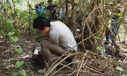 ผงะ! พบศพปริศนาในป่ากระถินสภาพกว่า 8 เดือน ถูกสัตว์แทะกินแห้งกังเหลือแต่กระดูก