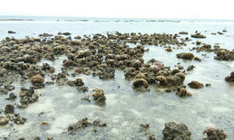 แปลก เกิดปรากฏการณ์น้ำทะเลลงต่ำ จนก้อนปะการังโผล่พ้นน้ำทะเลที่เกาะทะลุ