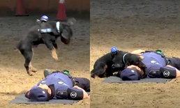 คลิปน่ารัก สุนัขตำรวจสเปนแสนรู้ โชว์ปั๊มหัวใจช่วยชีวิตตำรวจคู่หู