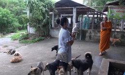 หมาจรจัดถูกทิ้งล้นวัดดังลำปาง เหลืออาหารเลี้ยงได้อีกแค่ 5 วัน