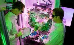 นักวิทย์ฯ เยอรมันปลูก-เก็บผักที่ขั้วโลกใต้ เล็งปลูกบนดาวอังคารต่อ