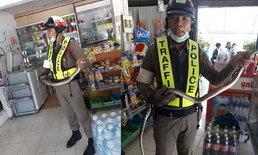 ตำรวจจับงู! รอง สวป.คว้าคอ งูสิงดง หนีฝนเลื้อยเข้าร้านค้าชาวบ้าน