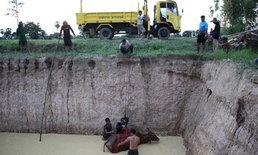 แม่วัวก้มหน้ากินหญ้าเพลิน ลื่นตกบ่อ กู้ภัยนำรถกระเช้าดึงขึ้นอย่างปลอดภัย
