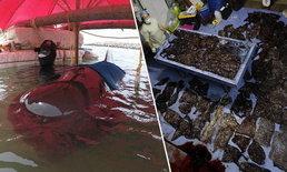 สุดยื้อ! วาฬเกยตื้นคลองนาทับ ผ่าซากพบถุงพลาสติก 80 ชิ้น ในกระเพาะอาหาร