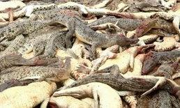 ชาวอินโดฯ รวมตัวฆ่าจระเข้ทั้งฝูง หลังแค้นหนัก คนในหมู่บ้านถูกลากไปกิน