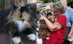 ชาวเมืองโหวตเป็นเอกฉันท์ เลือกแมวเหมียวเป็นนายกเทศมนตรี