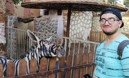 """ก็ได้เหรอ? หนุ่มแฉสวนสัตว์อียิปต์ """"ทาสี"""" บนตัวลาเป็นม้าลาย ตบตานักท่องเที่ยว"""