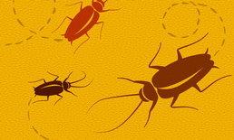 ไอเดียแจ่ม จีนกำจัดขยะด้วยกองทัพแมลงสาบกว่า 300 ล้านตัว