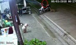 ปะทะหมา-คนร้ายฉก จยย.หน้าบ้านเหยื่อ หวิดถูกสุนัขกัดก่อนหลบหนีไปได้