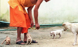 มส.ขานรับ ห้ามปล่อยสัตว์ในวัด ฝ่าฝืนจำคุกสูงสุด 4 ปี ปรับไม่เกิน 4 หมื่นบาท