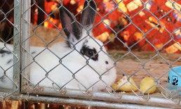"""สุดแปลก! กระต่ายเมืองลับแล ชอบกิน """"ทุเรียน"""" เจ้าของบอกขอกินทุกวัน"""