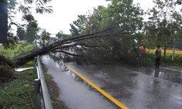 ฟ้าพิโรธ! พายุแรงต้นไม้ทับเก๋งถนนเอเชีย 41 โกลาหลหลายจุด
