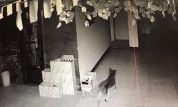 """โจรชาวจีนหัวใส สั่งให้ """"หมา"""" ช่วยดูต้นทาง ขณะลงมือขโมยของ"""