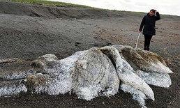 ซากสัตว์ประหลาดดึกดำบรรพ์ โผล่กลางชายหาดรัสเซีย