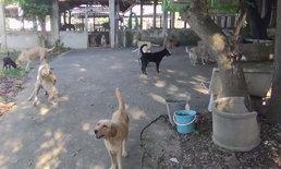 """""""วัดเลี้ยงหมา"""" ลำบากหนัก ต้องการอาหารเม็ดจำนวนมาก หลังสุนัขล้นวัด"""