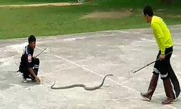 """จับงูมาราธอน """"งูจงอาง"""" เลื้อยซ่อนตัวใต้ห้องอนุบาล กว่าจะจับได้กินเวลากว่า 6 ชั่วโมง"""