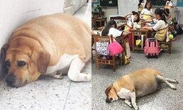 โรงเรียนไต้หวัน ห้ามครู-นักเรียน ให้อาหารน้องหมา หลังน้ำหนักพุ่ง 50 กก.