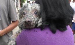หวิดถูกย่างสด! จนท.เร่งดับเพลิงช่วยสุนัขพุดเดิ้ล 5 ชีวิตออกจากทาวน์เฮ้าส์